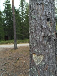Hållbarhet Umeå Tours